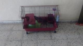 Guinea pig jaula , conejillo de indias