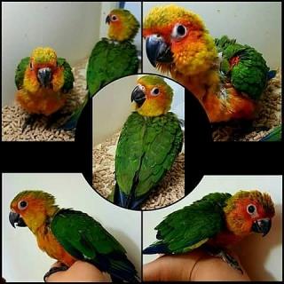 Aves Para La Venta