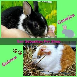 Conejos y Guimos Para La Venta