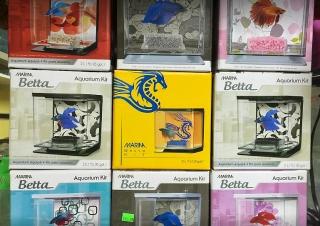 Variedad de peceras para tu Betta