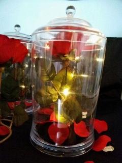 Beauty and The Beast Rose / Rosa Bella y La Bestia