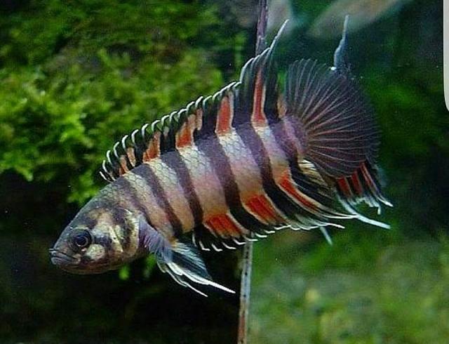 Variedad de peces para la venta para compra venta en for Variedad de peces