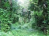 Brisas del Yunque | Bienes Raíces > Residencial > Terrenos > Solares | Puerto Rico > Loiza