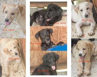 Bellos Perritos para Adopción