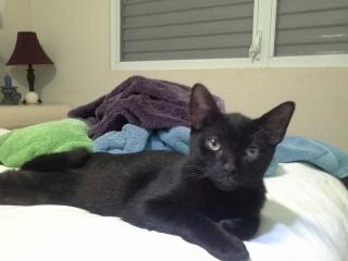 Gatito negro en busca de un hogar