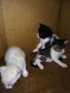 Se regalan gatitos@ de un mes de nacidos