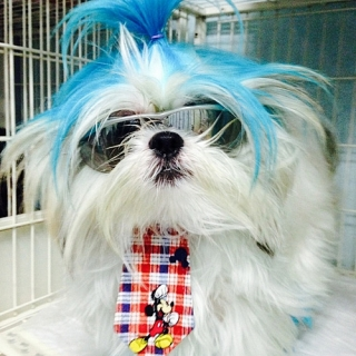 Danliz Grooming Dog a Domicilio Area Metro P.R