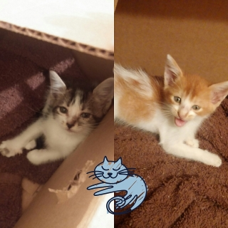 Bellos Gatos en Adopcion