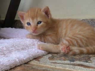 Se regalan gatitos en área de Caguas GRATIS