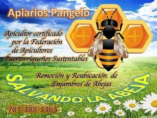 Apicultor Certificado por la Federación de Apicultores Puertorriqueños Sustentables Remoción y Reubicación de Abejas