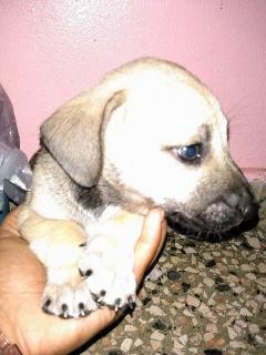 Adoptame!!