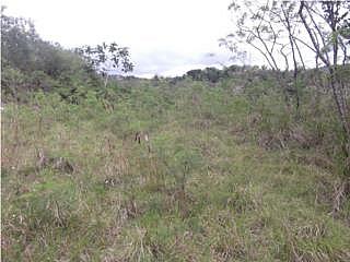 Terreno en Aibonito Guerrero