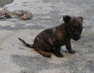 por favoor necesitoo que adopten este cachoro urgente