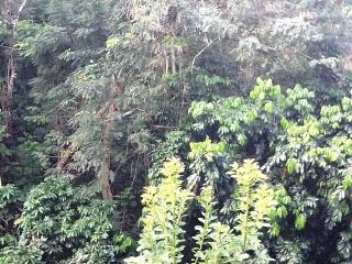 El Bosque Acogedora Vista