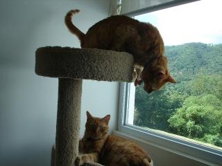 Se regalan 2 gatitos color amarillo