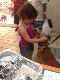 Hermoso perrito para adopción