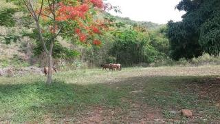 Finca 8 cuerdas con agua,luz,telefono,carretera alrededor de la finca  privada a tres minutos del pueblo de Guayama y centros comerciales.