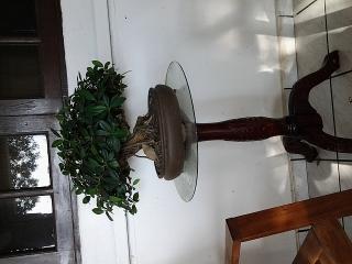 arbol bonsay