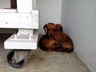 Perritos para adopción
