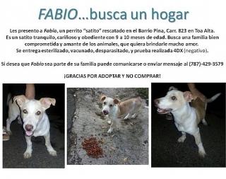 Fabio en busca de un hogar