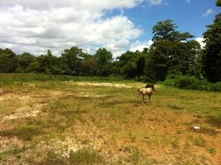 Hermoso terreno 7.86 cuerdas llano en Bo Piedras Blancas