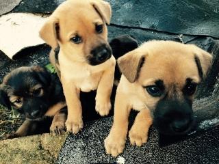 Puppies para adopción