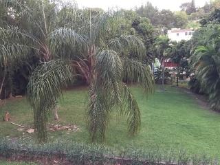 Sierra Taina, Bayamon