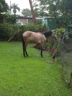 caballo ballo 700 o mejor oferta