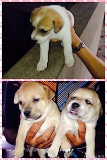 Puppies nenas de un mes! Buscan hogar!! Son satitas!