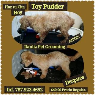 Grooming a Domicilio para Perros medianos y pequenos