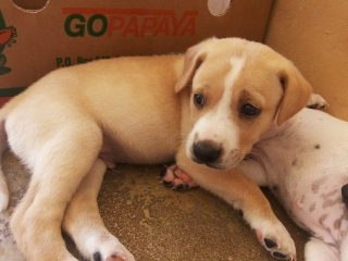 Se regalan Puppies SATOS pequeños