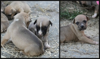 Perritos bebes carinosos para adopcion