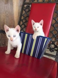Gatitos de 3 meses