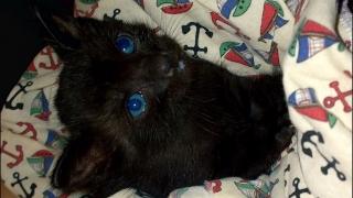 Gato rescatado busco hogar