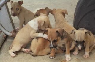 Perritos carinosos en busca de un hogar