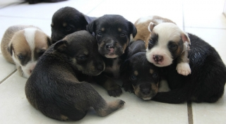 Se busca hogar para perritos bebes