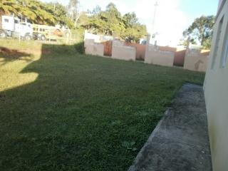 Hormigas en Caguas