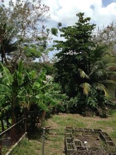 BARRIO PUEBLO EN GUAYNABO