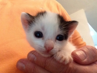 Gatitos bellos buscando hogar