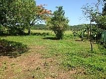 MAGUAYO