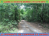 BO. VEGAS CARR 128 KM 9.0 INT YAUCO | Bienes Raíces > Residencial > Terrenos > Solares | Puerto Rico > Yauco