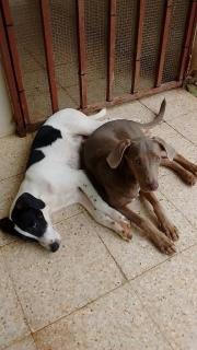 Regalo 2 perros