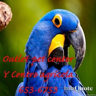 Guacamayos y Aves exóticas