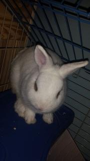 Se regala conejo blanco