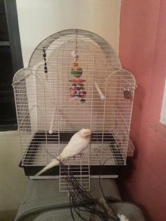 Jaula para ave