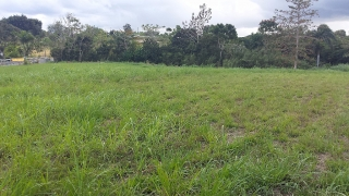 Bo. Robles Sector Tamarindo, San Sebastian