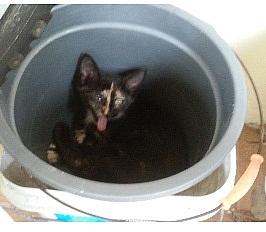3 Gatitos para la adopción