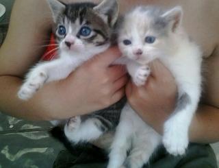 se regalan gatitos de un mes de nacidos