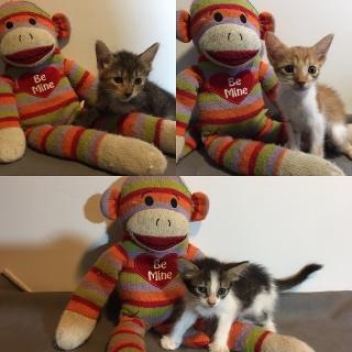 Bellos Gatitos en busca de un hogar