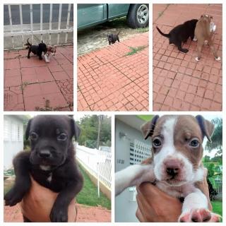 Perrito puppy